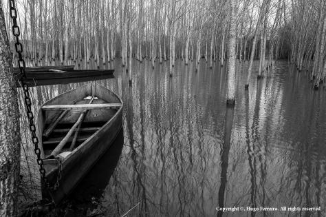 Lagoa da Pateira,  freguesia de Fermentelos, concelho de Águeda, distrito de Aveiro / Pateira lagoon, in Fermentelos town, Águeda, Aveiro district. --- Aperture: f/11; Exposure: 1/13s ; ISO: 100;